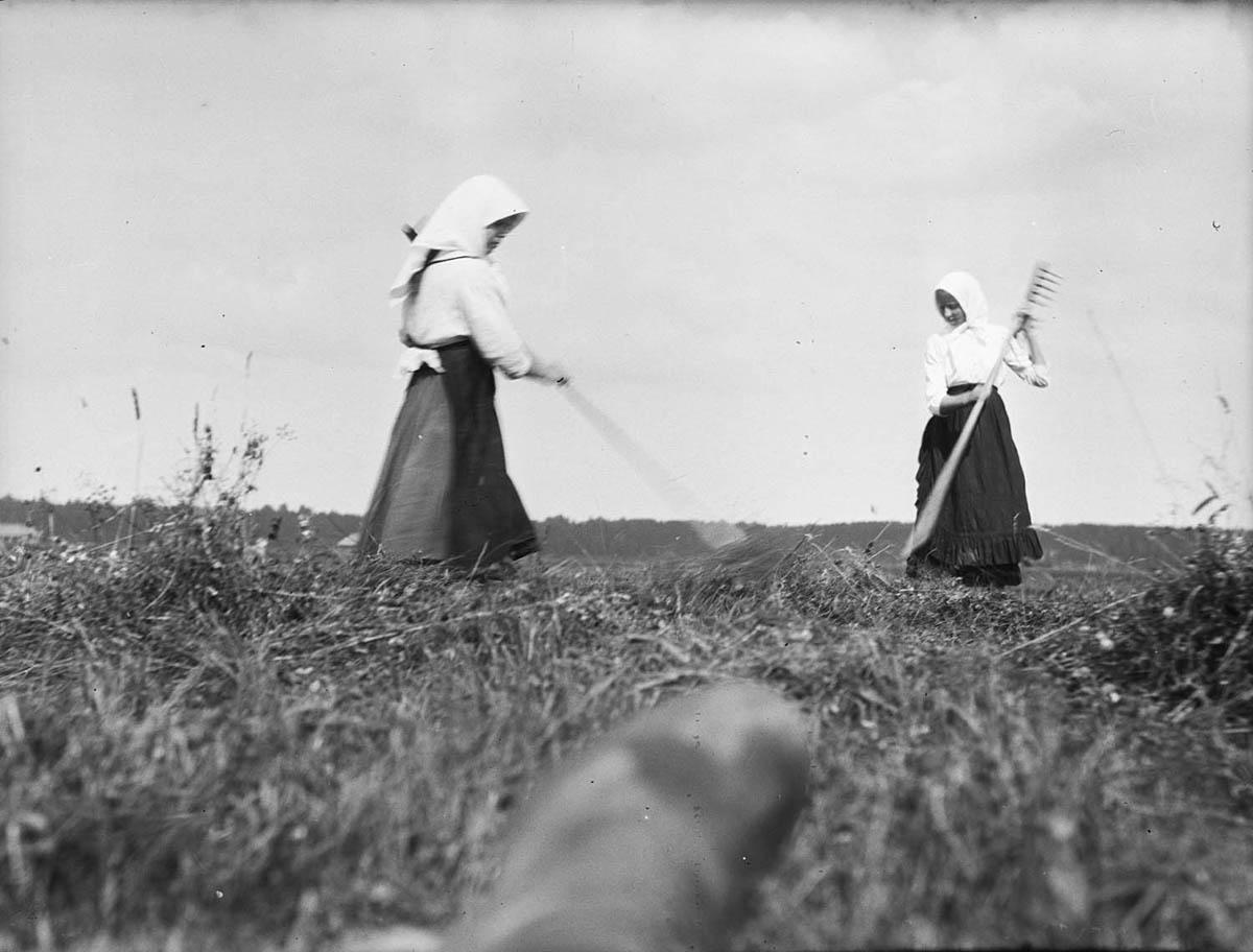 Крестьянки ворошат сено. Начало ХХ века. Архив семьи Морозовых